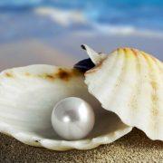 perla 2